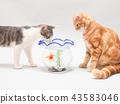 ปลาทองและลูกแมวสองตัว 43583046