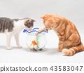 ปลาทองและลูกแมวสองตัว 43583047