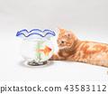 小貓看金魚 43583112