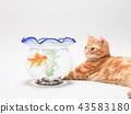 小貓看金魚 43583180