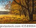 Scenery autumn background 43589064