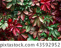 background, autumn, leaf 43592952