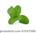 mint leaves isolated on white background 43597066