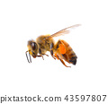 A bee on whit background 43597807