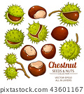 chestnut vector isolated 43601167