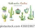 Set cactus hand paint watercolor collection. 43603967
