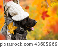 Black mutt dog posing in autumn park. 43605969