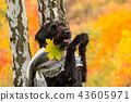 Black mutt dog posing in autumn park. 43605971