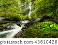 Beautiful waterfall in the national park forest 43610428