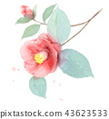 camellia, japanese camellia, flowers 43623533