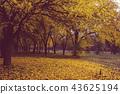 Autumn tree 43625194