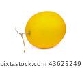 whole yellow cantaloupe melon isolated on white  43625249