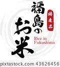 米 水稻 稻米 43626456