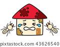집 흰개미 피해 43626540