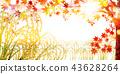 단풍, 벼, 가을 43628264