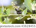 แมง,แมลง,ธรรมชาติ 43628455
