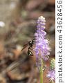 แมง,แมลง,ผึ้ง 43628456