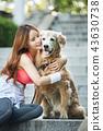 젊은여자, 개, 강아지, 애완동물, 골든 리트리버 43630738