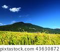 ท้องฟ้าเป็นสีฟ้า,เกษตรกรรม,เนินผา 43630872