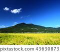 ท้องฟ้าเป็นสีฟ้า,เกษตรกรรม,เนินผา 43630873