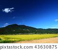 ท้องฟ้าเป็นสีฟ้า,เกษตรกรรม,เนินผา 43630875
