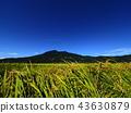 ท้องฟ้าเป็นสีฟ้า,เกษตรกรรม,เนินผา 43630879