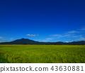 ท้องฟ้าเป็นสีฟ้า,เกษตรกรรม,เนินผา 43630881