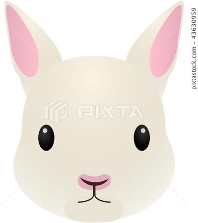 토끼 43630959