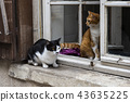 Cats in Window Orleans 43635225