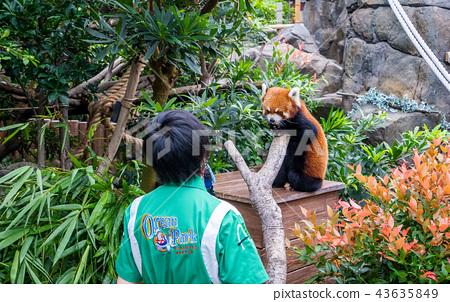 홍콩 해양 공원 리틀 팬더 레드 홍콩 콩 팬더 43635849