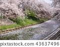 奈良佐渡河櫻花樹 43637496