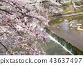 奈良佐渡河的櫻花 43637497