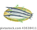 pike fish, saury, fish 43638411