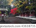 ต้นเมเปิล,ภูเขาฟูจิ,ภูเขาไฟฟูจิ 43638735
