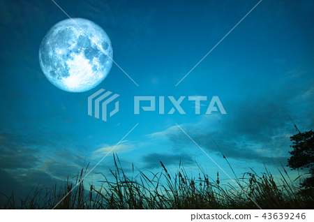 full blood moon over silhouette grass colorful sky 43639246