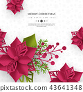 christmas, poinsettia, xmas 43641348