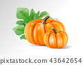 Set vegetable pumpkins with green leaves isolated on transparent background. Realistic vector, 3d 43642654