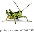 Grasshopper 43642899