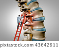 Spine Therapy 43642911