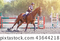Young woman riding horse on equestrian competition 43644218