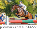 Young horse rider girl on show jumping competition 43644222