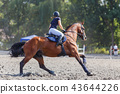 Young woman riding horse on equestrian competition 43644226