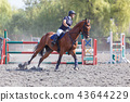 Young woman riding horse on equestrian competition 43644229