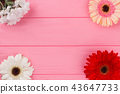 Chamomile and gerbera daisy flowers on wood. 43647733