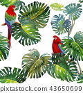 Tropical Leaves of monstera and Macaw bird. 43650699