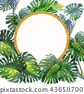 Trendy Summer Tropical Leaves of monstera 43650700