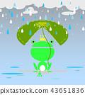 rainy season and the frog 43651836