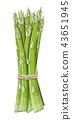 Asparagus vegetable stem isolated on white. 43651945