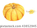 Hand drawn watercolor painting of Pumpkin. 43652945