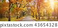 alley in autumn 43654328